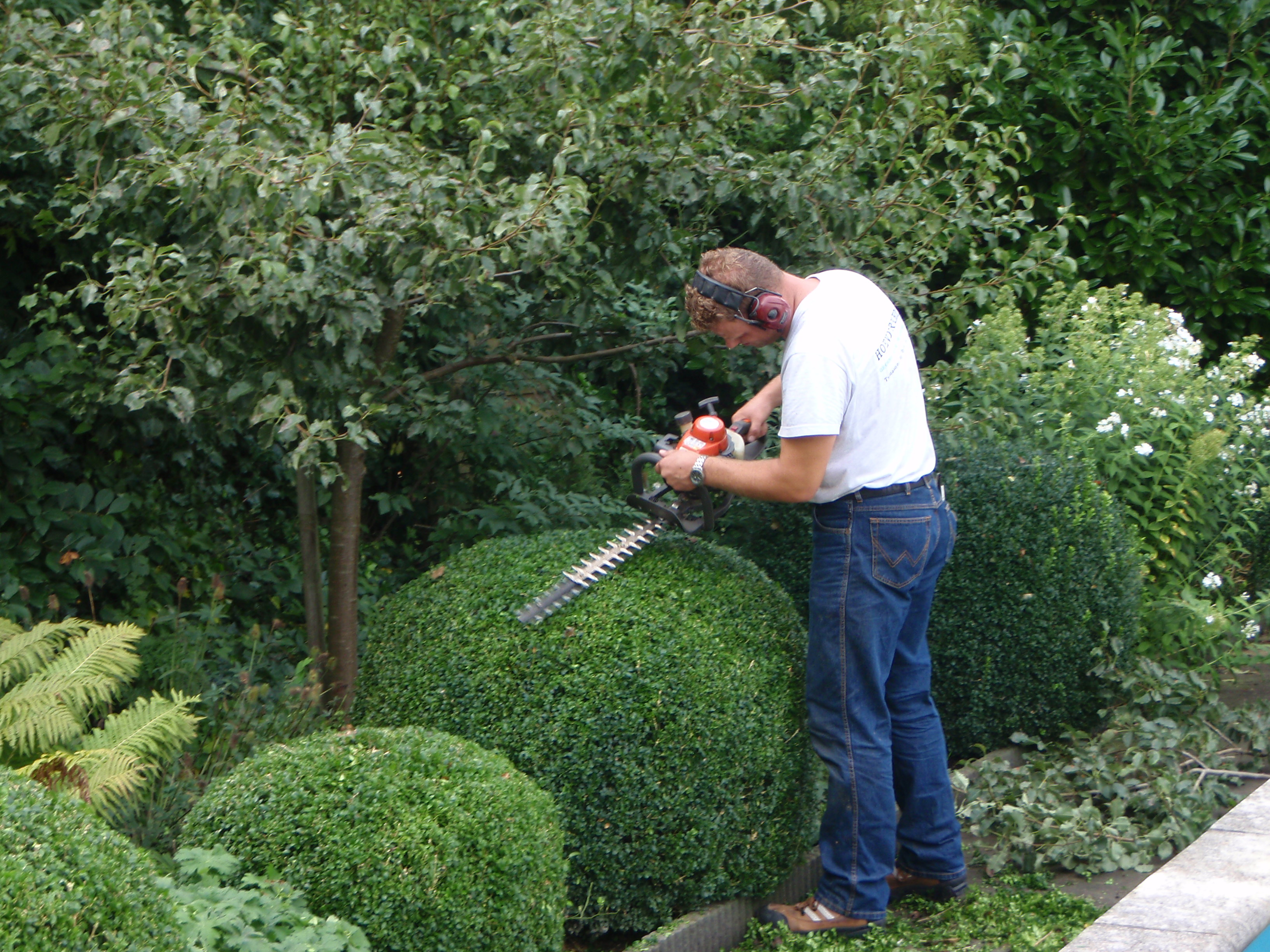 Tuin onderhoud voor alle onderhoud werkzaamheden rondom for Tuin snoeien